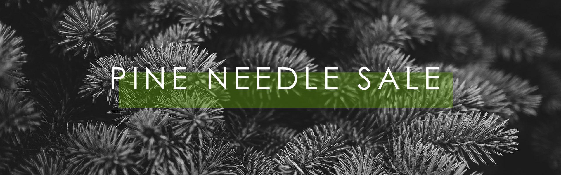 Pine Needle Sale